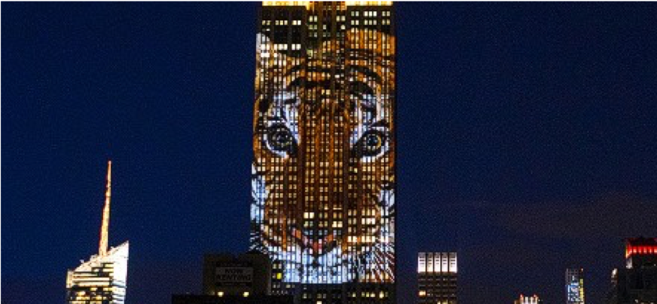 The Empire State Building used projection mapping to raise awareness for endangered animals by projecting animals, like this bengal tiger, across the building.