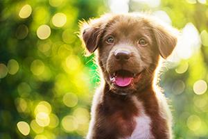 puppy raster image