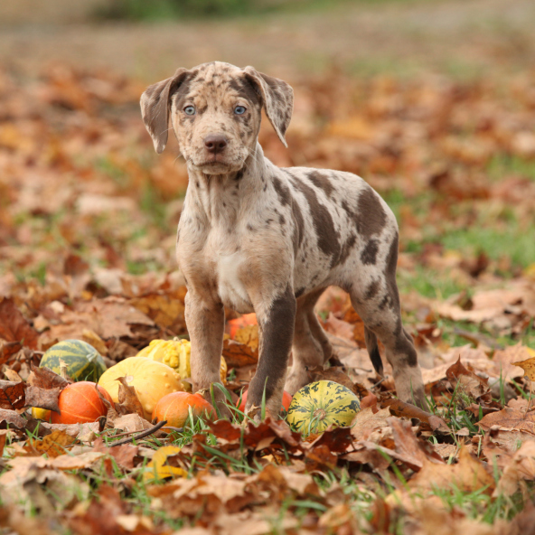 regular puppy picture