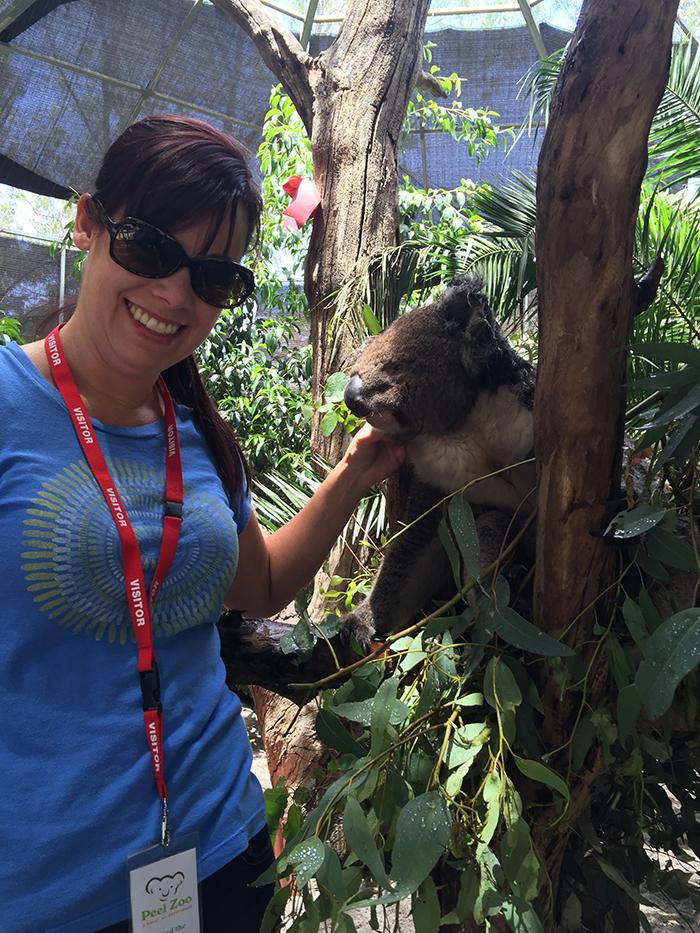 Anne Siebum Koala Australia