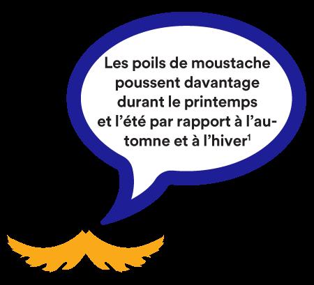 Les poils de moustache poussent davantage durant le printemps et l'été par rapport à l'automne et à l'hiver. (1)