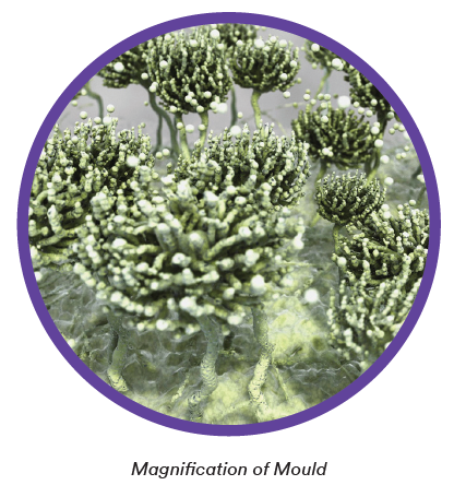 Magnification of mould.