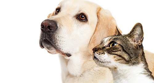 When Pets Are Collateral for Secured Loans