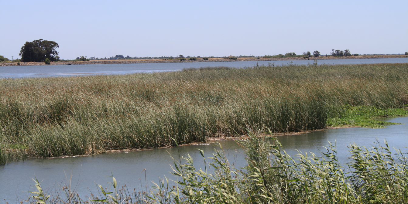 An in-depth look at the new leader of the Delta Stewardship Council as published in The Water Report