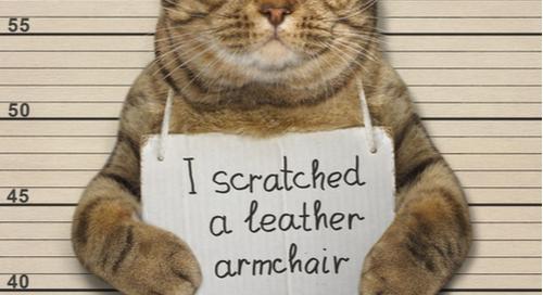 猫のマグショット