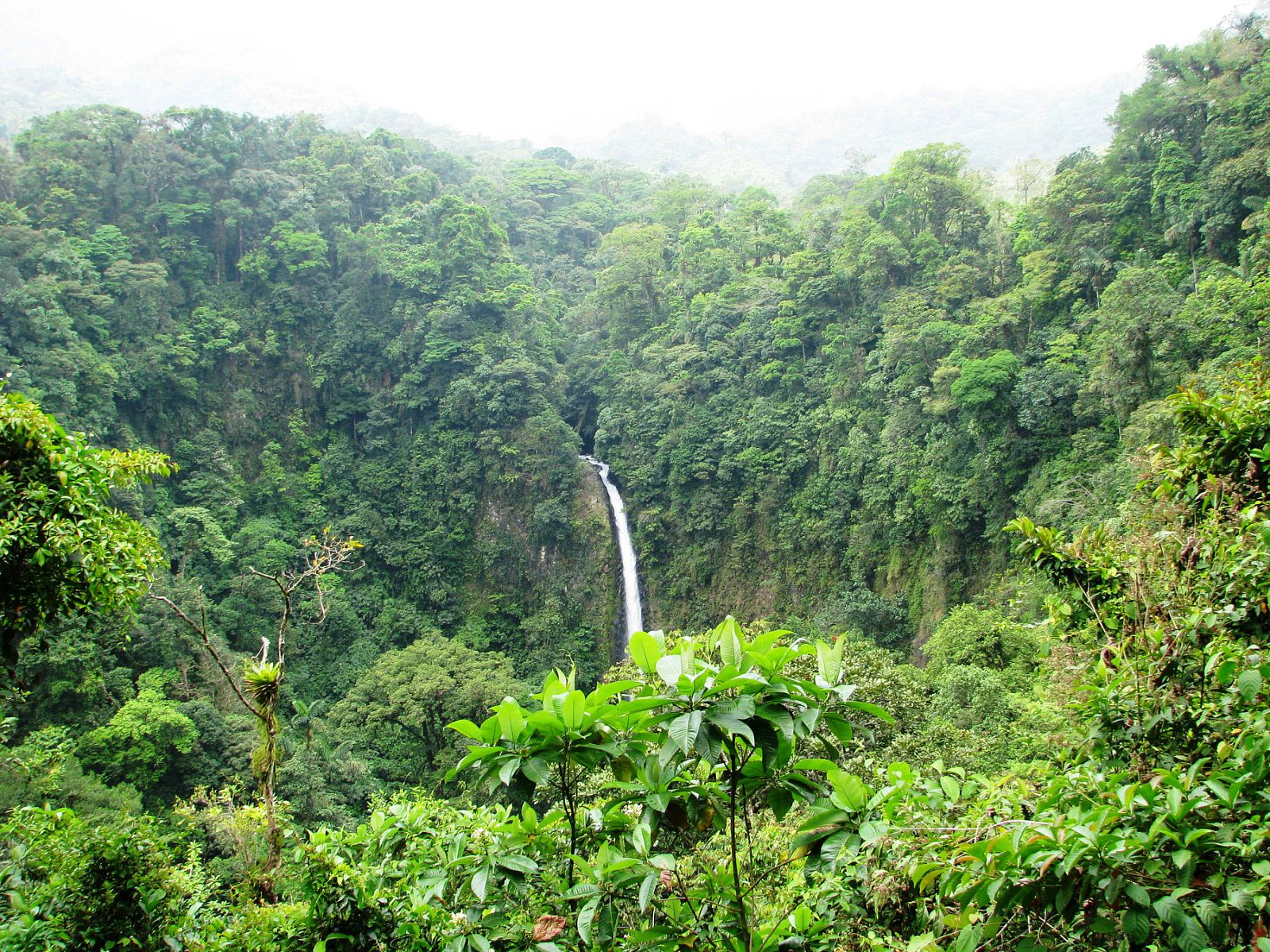 Overlook of a lush green rainforest with waterfall on an overcast day