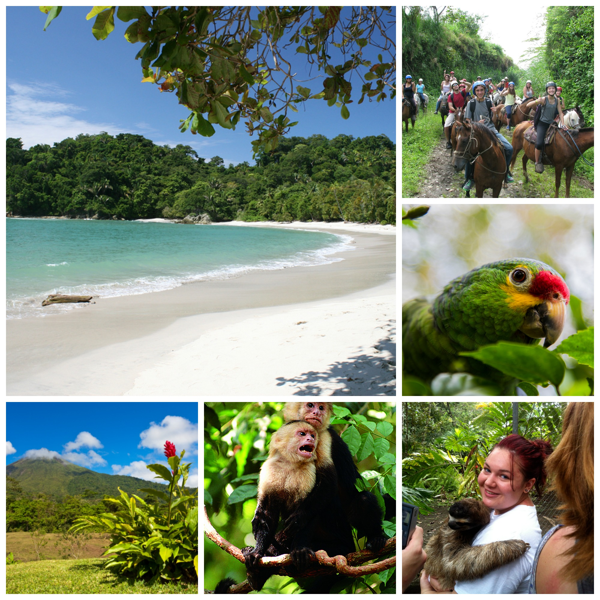 Left, top: Clear blue waters, white sand, and lush trees at Jaco Beach | Left, bottom: Arenal Volcano on a clear day with blue skies | Left, center: Pair of Capuchin monkeys perched on a vine in a rainforest | Right, top: Encore group horseback riding through rainforest, giving thumbs-ups and smiles to the camera | Right, middle: Close-up of Red-lored Amazon parrot's face | Right, bottom: Student holding a three-toed sloth at a reserve in the rainforest