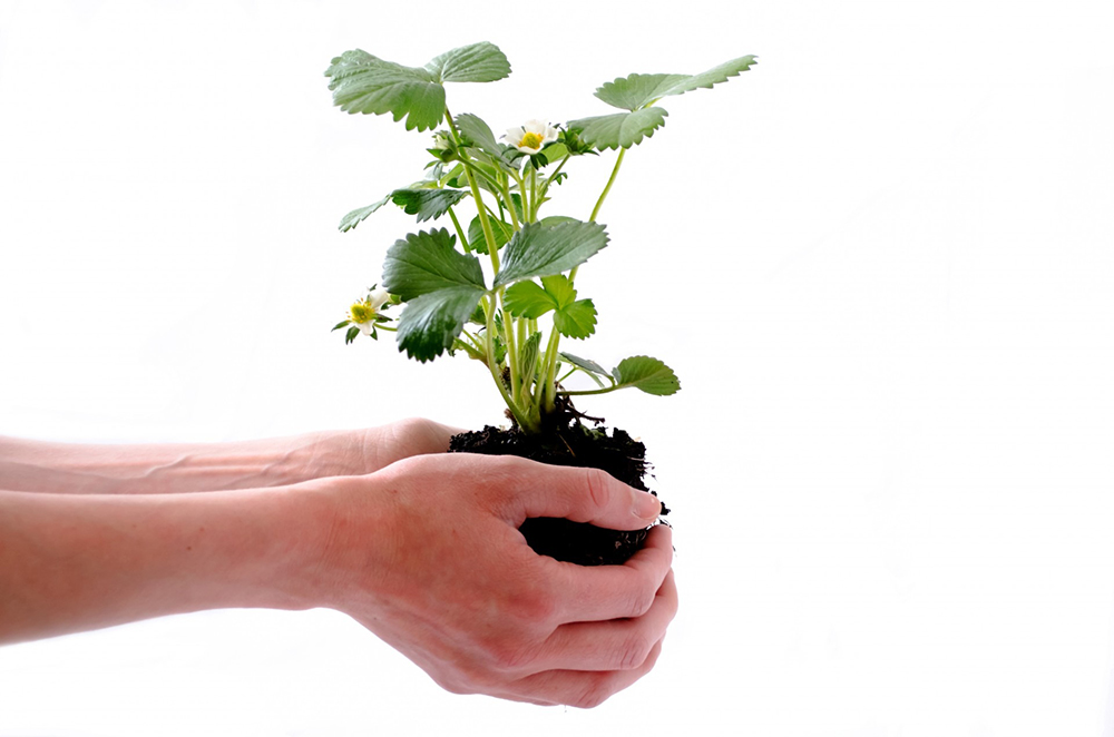 Hands holding a plant.