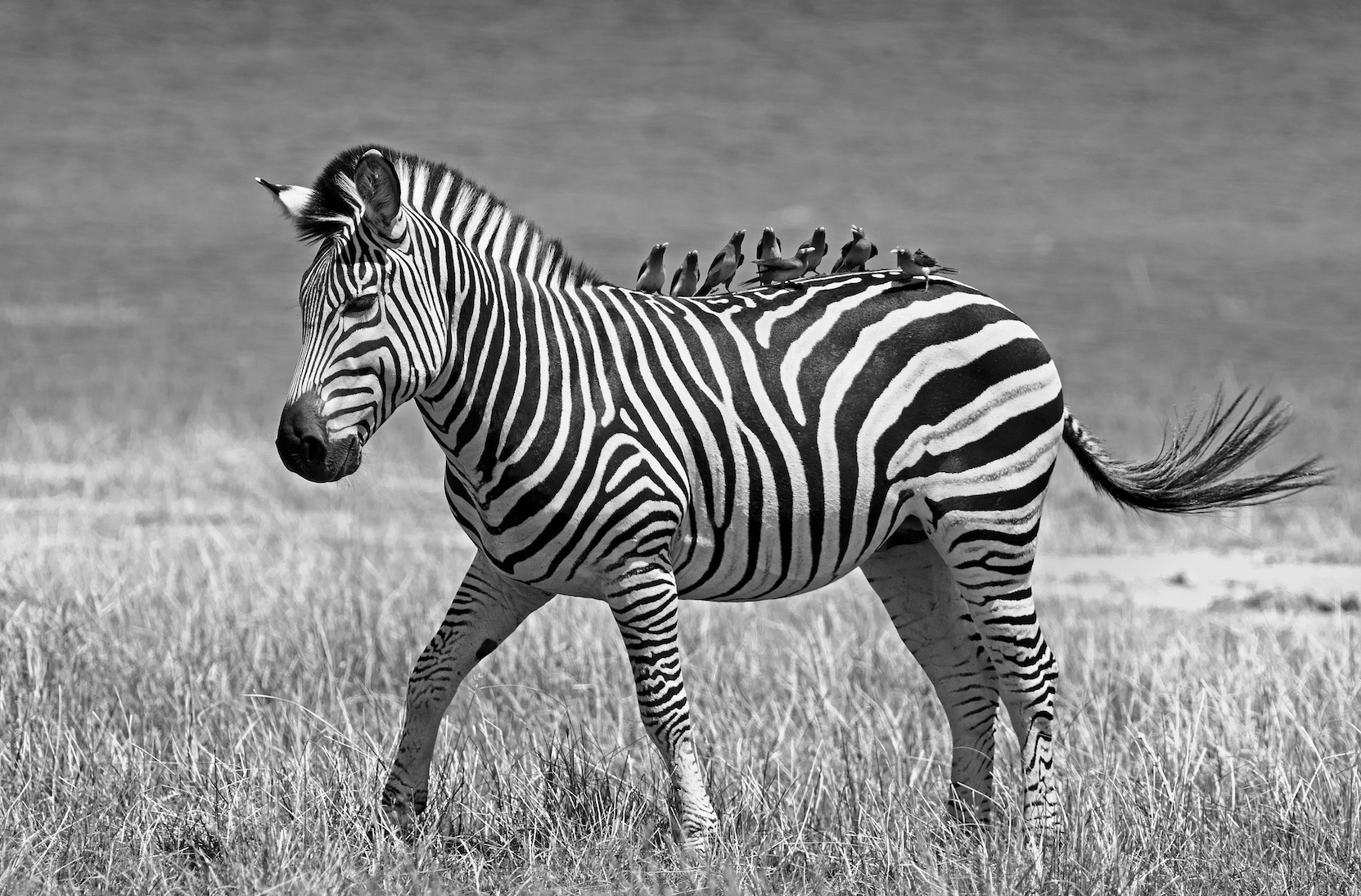 Retail and consumer brands should have a mutualistic relationship, like the zebra and oxpecker.