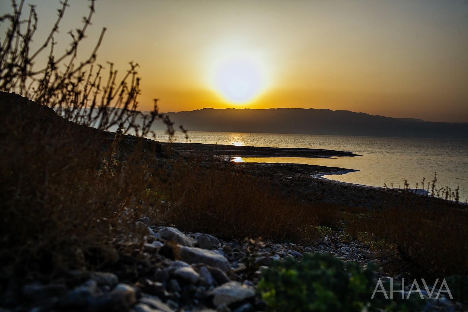 sunrise dead sea nature plants