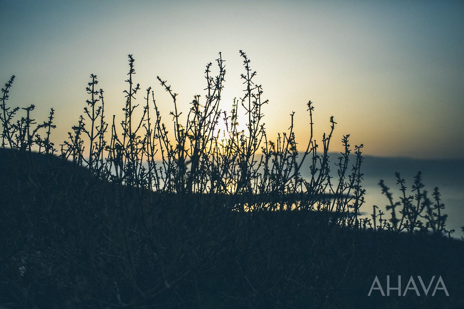 dead sea nature plants