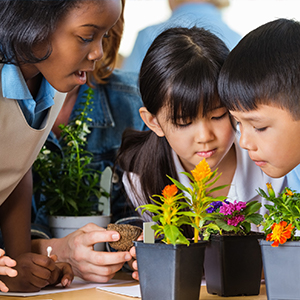 bambini piccoli che guardano le piante