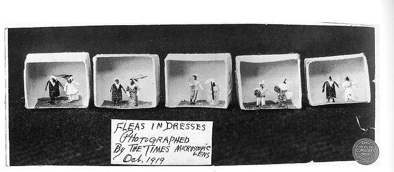 Fleas in costumes