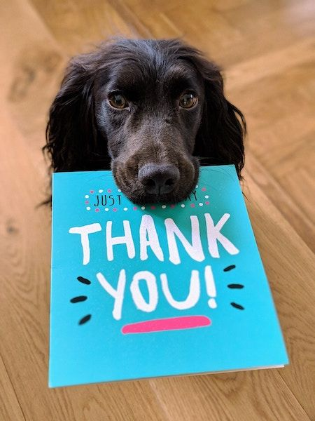 dog holding thank you note