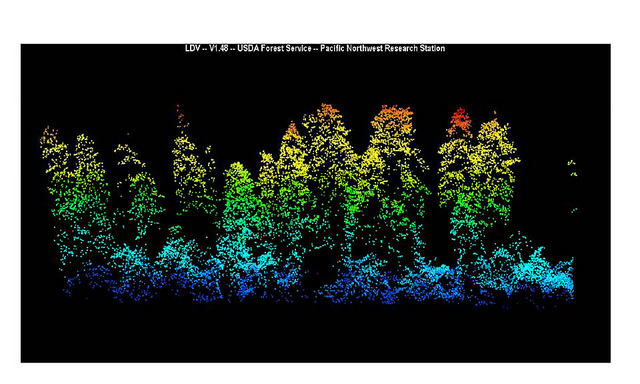 LIDAR picture of forest