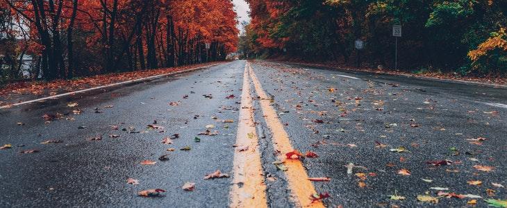 Une route mouillée avec des feuilles d'arbres de couleurs différentes.
