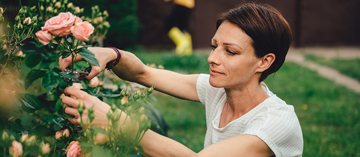 A woman clipping pink roses in her garden.