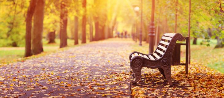 Une piste cyclable dans un paysage d'automne.