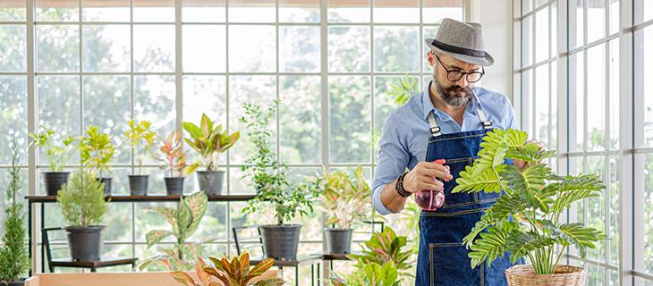 Homme plus âgé dans une serre en pulvérisant de l'eau sur les plantes.