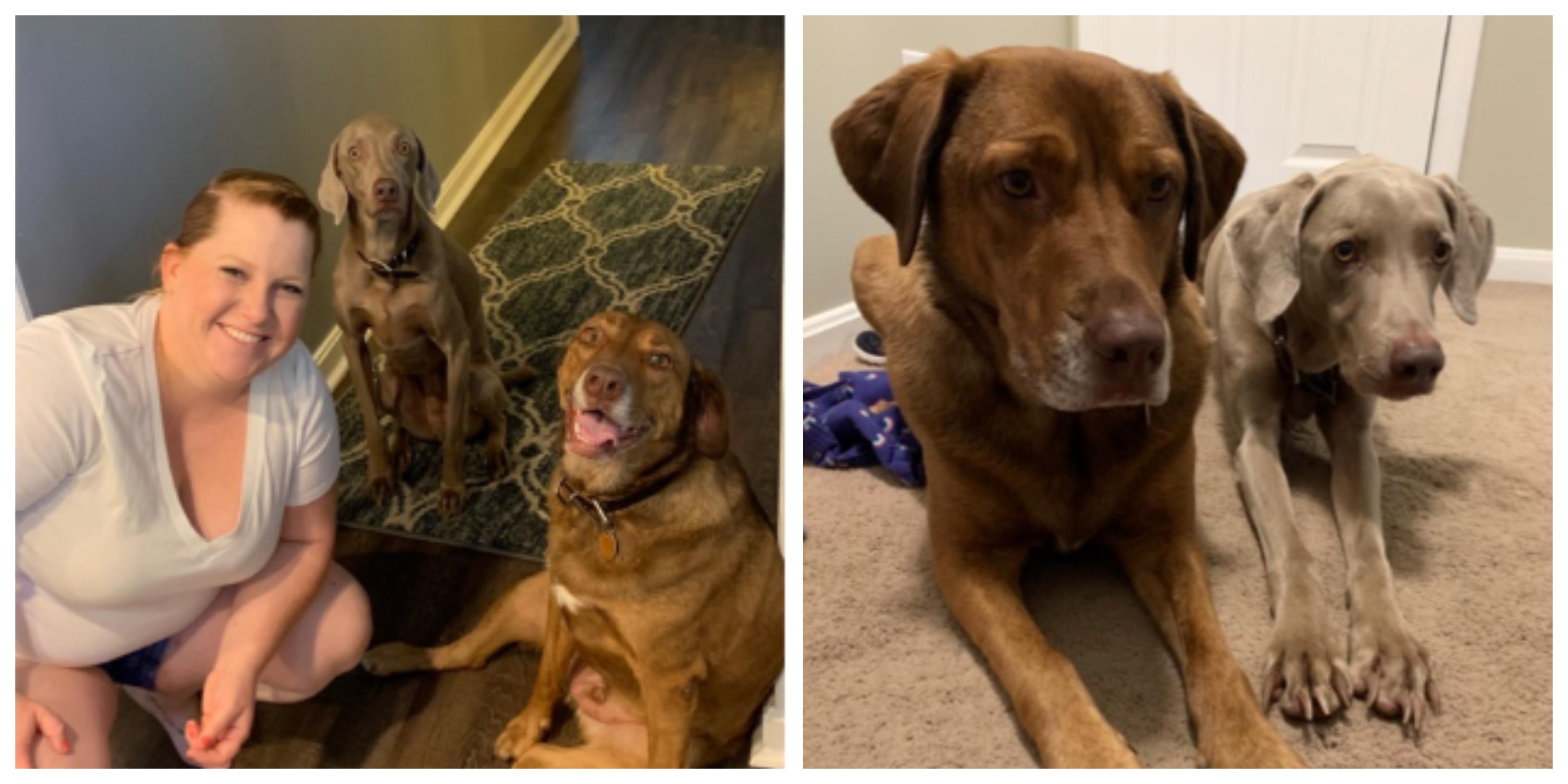 Jessica Demuth Howie and Gunner #DogsofAppirio