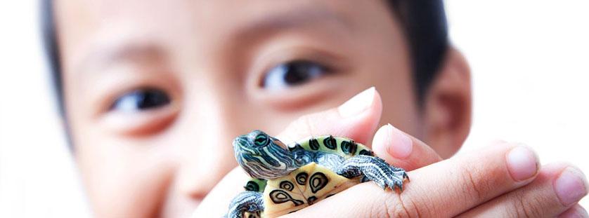 understanding-zoonotic-diseases