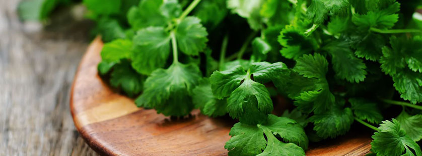 why-some-people-hate-cilantro