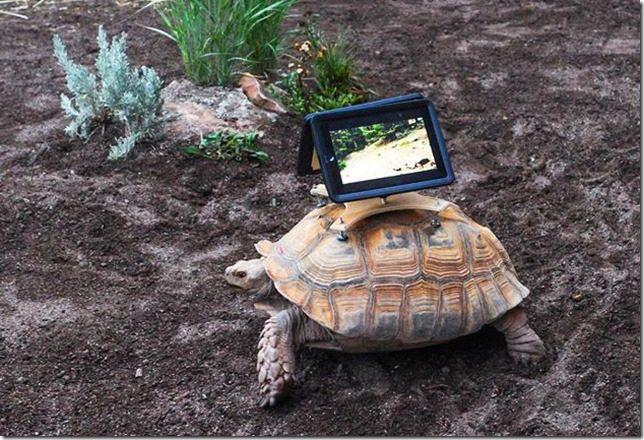 Tablet on a Turtle - Is this Omni-Channel?
