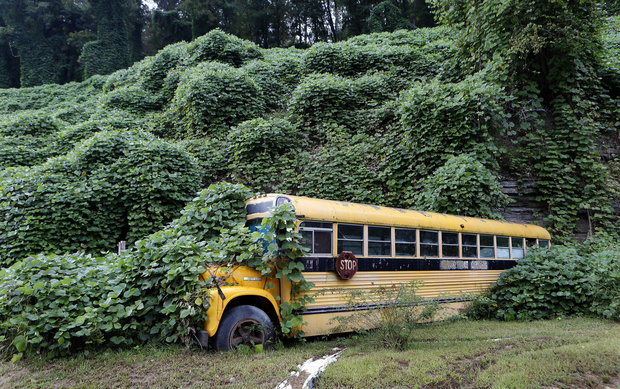 School Bus Stuck in Kudzu
