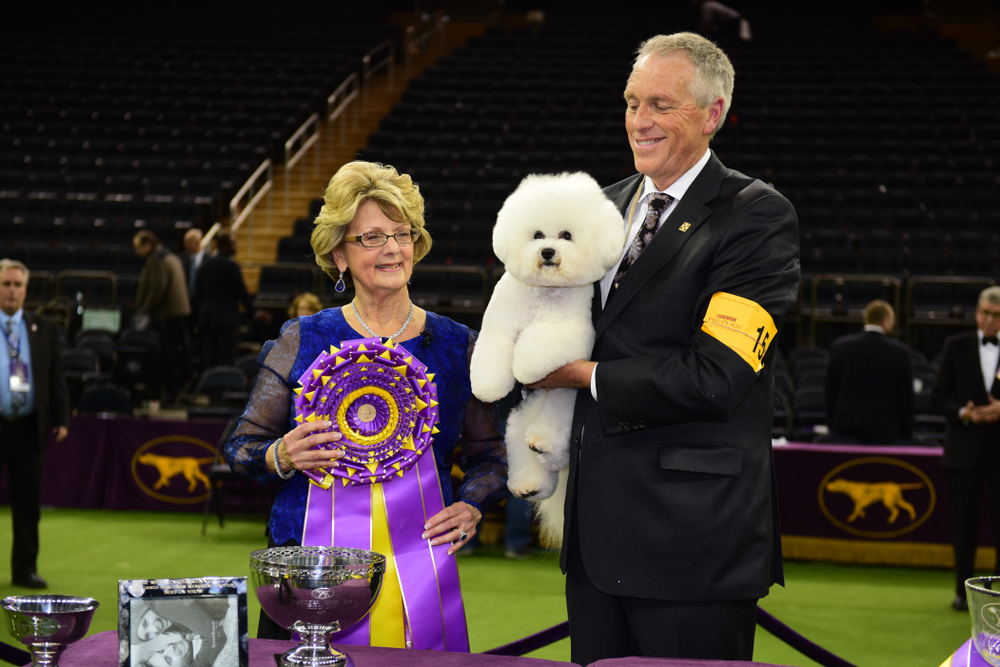 Shutterstock_1036578463  NEW YORK CITY - February 14 2018: The 142nd Westminster Kennel Club Show concluded with selection of Best in Show. Winner, Bichon Frise, Flynn with handler Bill McFadden and judge, Betty-Anne Stenmark