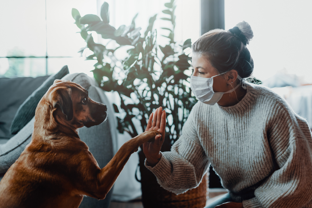Shutterstock_1689740593 Woman wearing a protective face mask cuddles, plays with her dog at home because of the corona virus pandemic covid-19