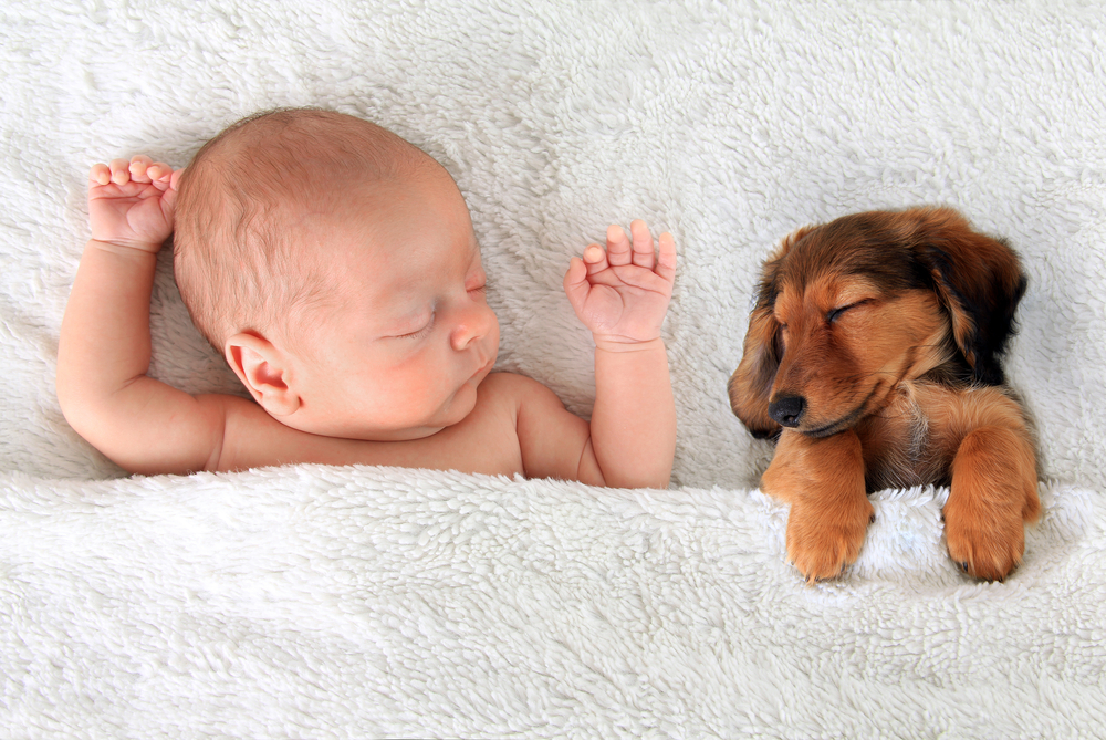 Shutterstock_267449483 Newborn baby and a dachshund puppy sleeping together.