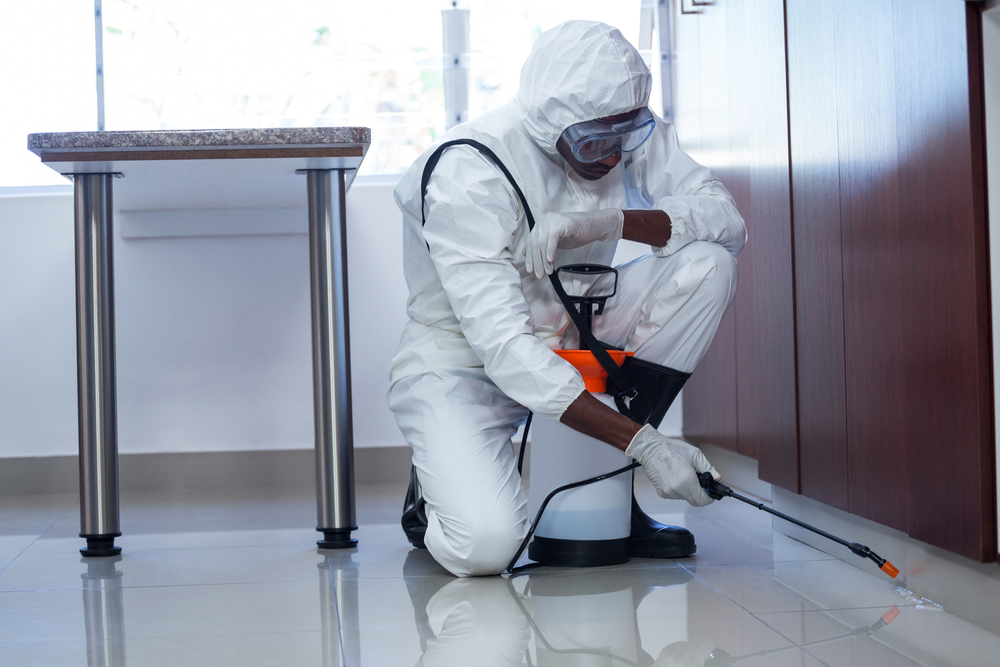 Shutterstock_571044412 Man doing pest control at home