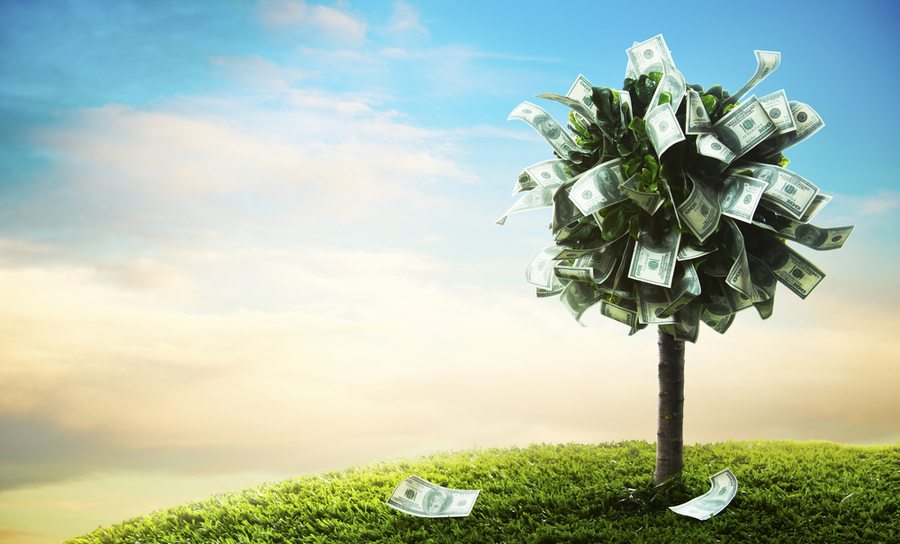 Picture of money growing on trees