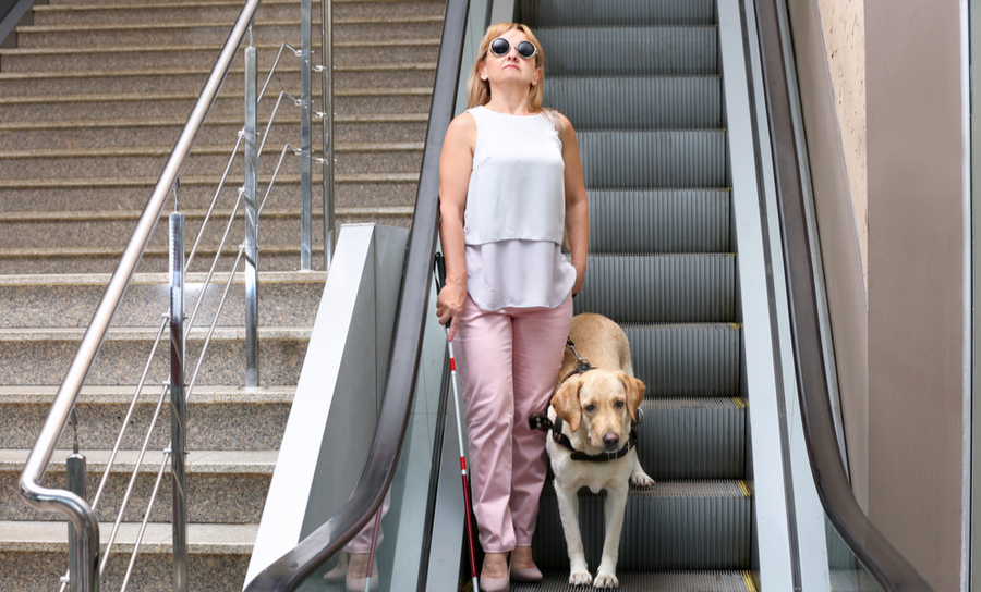 Dog guides woman on the escalator