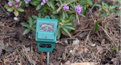 pH meter measuring while stuck into the soil next to a flower bush