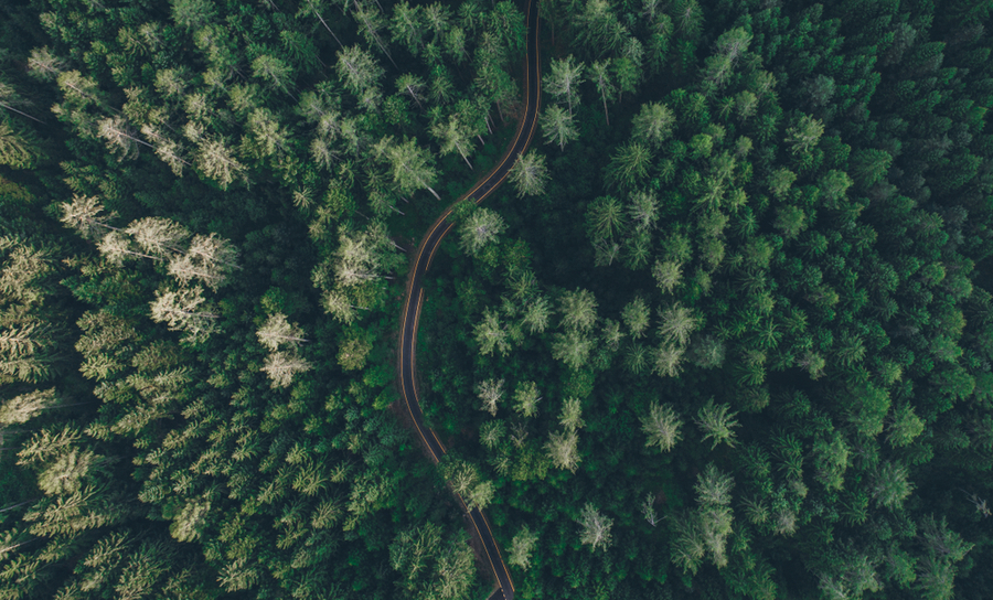 Aerial view of a road through the limits of a deciduous forest
