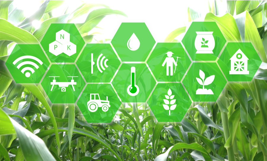 Wireless internet of things devices in front of green crops