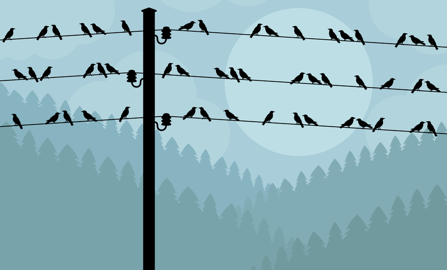 Birds perched on a telephone wire against the night sky