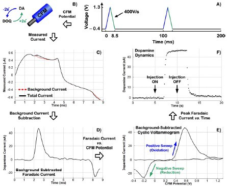 Overview of FSCV process graphs for measured dopamine levels
