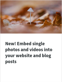 New! Embed single photos and videos into your website and blog posts