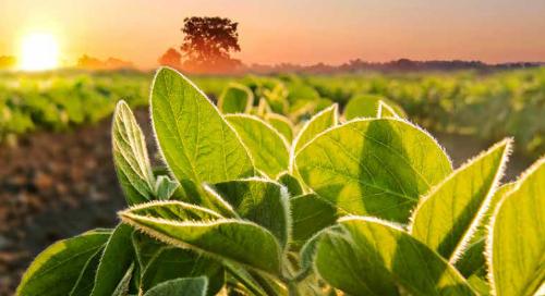 Guide des semences de soya 2020