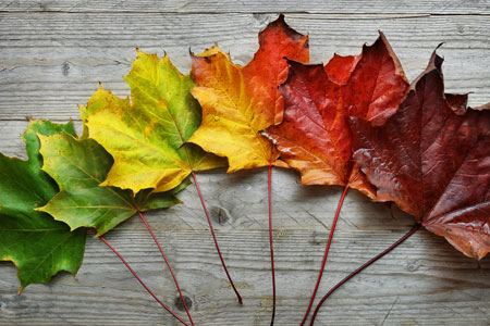 Biology activity for fall – Chromatography lesson plan