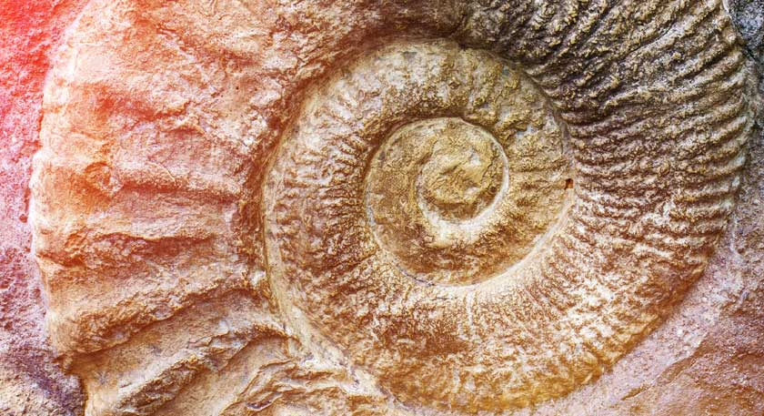 Fossil activities and ideas for your classroom