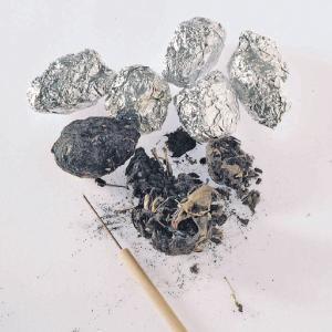 Introduction to owl pellets classroom lab activity