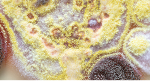 How to teach with Bacteria and Fungi: A free guide for working with and caring for your live materials