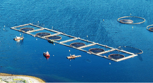 Aquaculture In Atlantic Canada: Playbook for global companies
