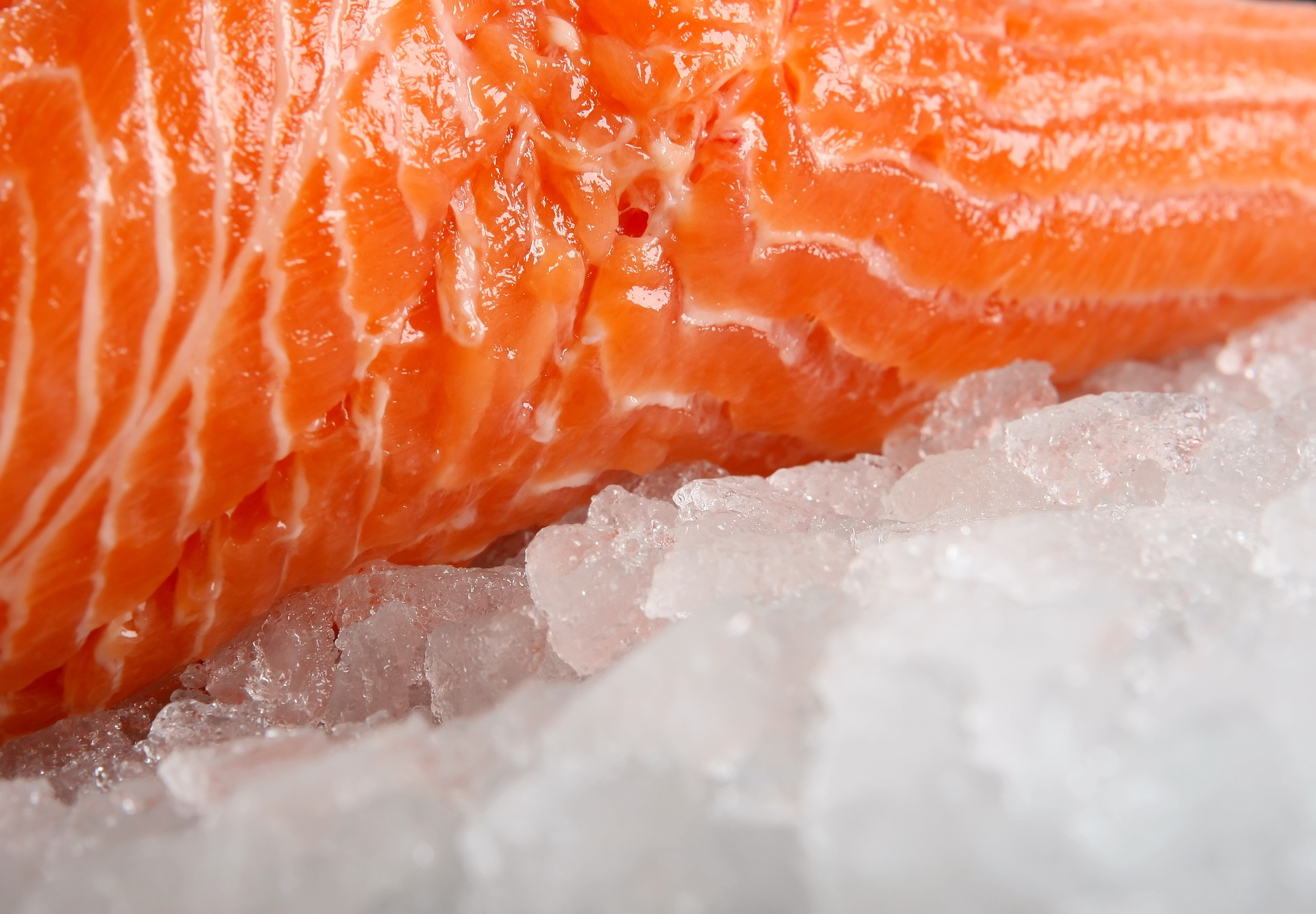 A zoomed in section of uncooked salmon laying on a bed of ice. - TAB Bank
