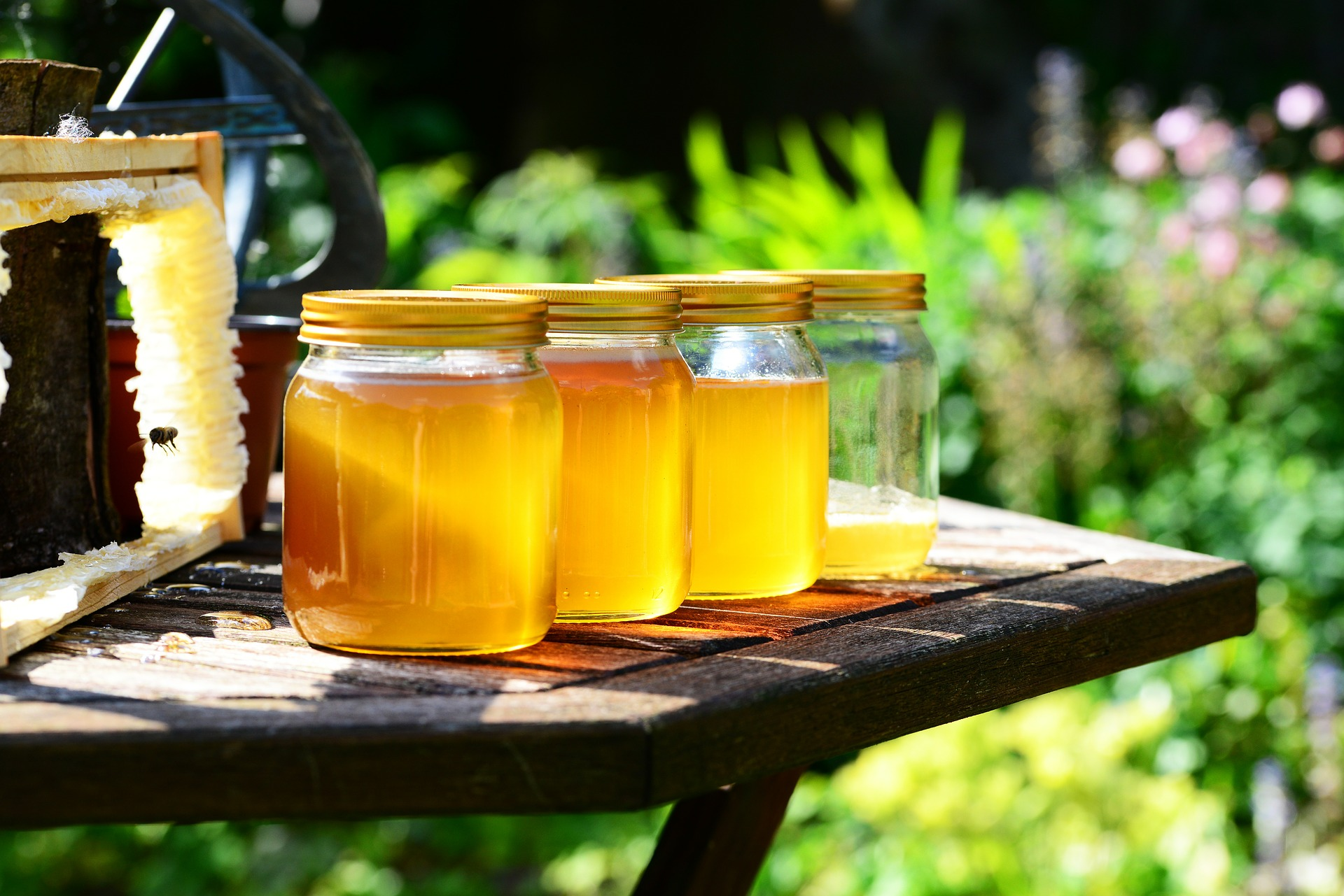 Image of mason jars full of honey sitting on a table outside with green leaves in background - TAB Bank