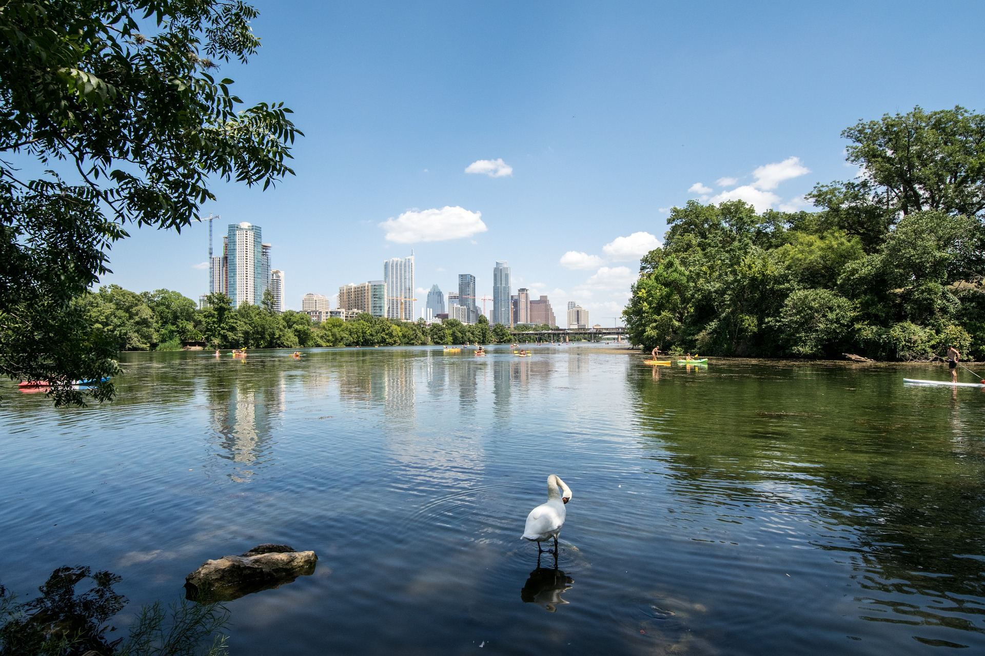 Image of the Austin skyline taken from across a lake with a swan on it |TAB Bank