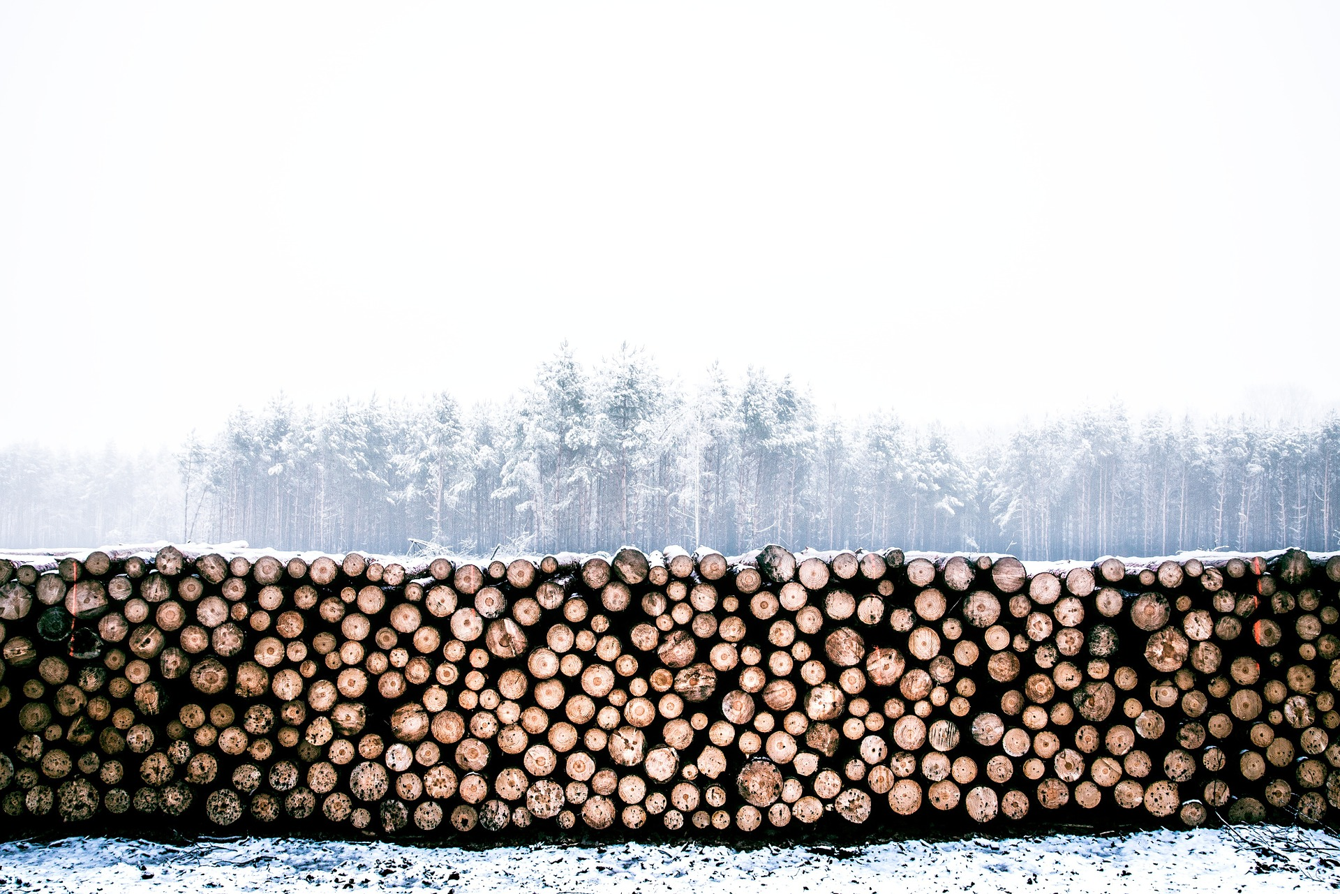 Image of a stack of logs | TAB Bank
